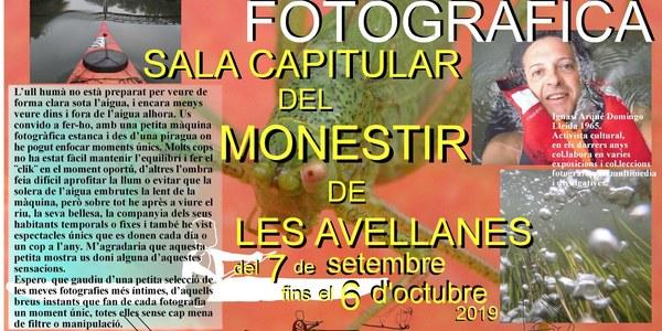 Exposició Fotogràfica - Sala Capitular del Monestir de Les Avellanes del 7 de setembre fins al 6 d'octubre 2019